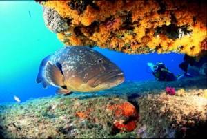 Gazdag víz alatti élet Thaiföldön