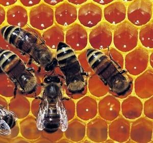 Részletes információk a méhpempőről