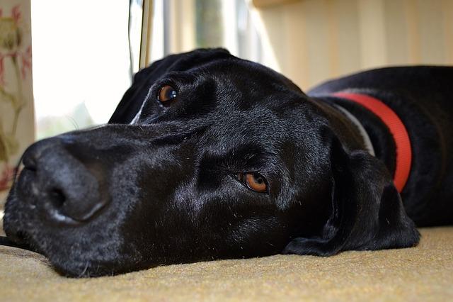 Kiegészítők kutyáknak